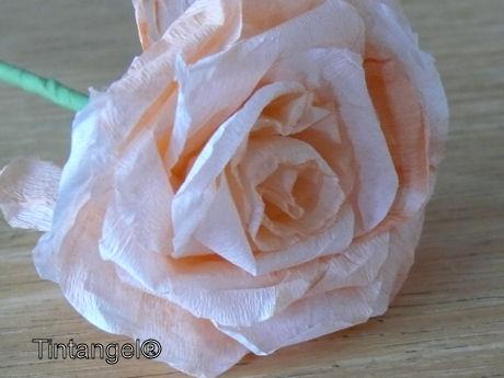 Oranje roos web