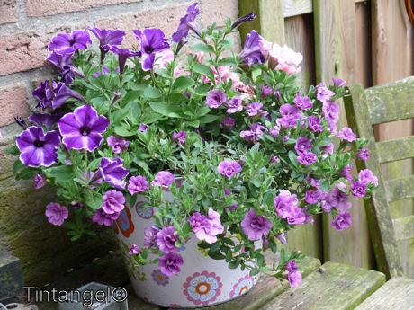 Fleur in de tuin 2 web