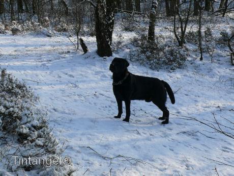 Troy in de sneeuw web