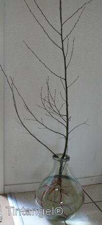 Berkenboompje