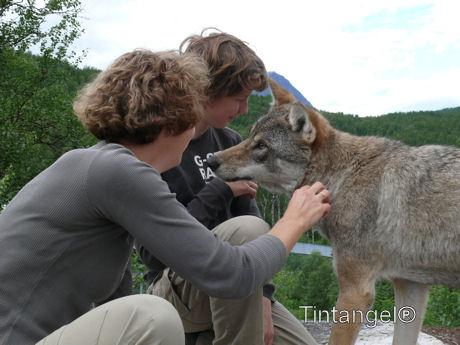 Nordic Zoo 2010