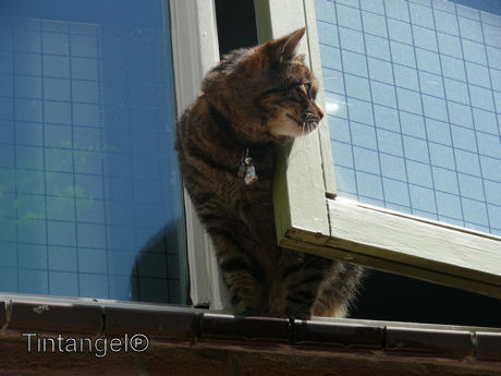 Poes uit het raam web