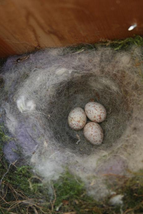 Nestje met wol