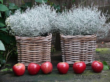 Decoreren met rode appeltjes