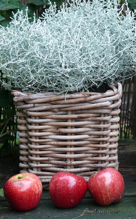 Rode appeltjes decoratie