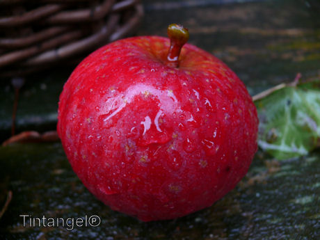 Appel in de regen
