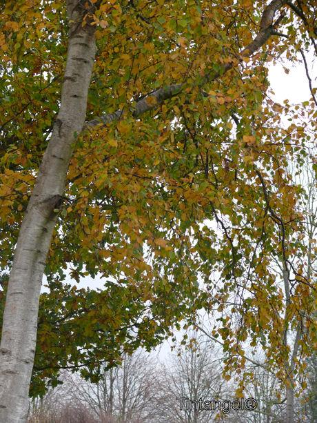 Herfst 2