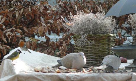 Vogelsvoeren