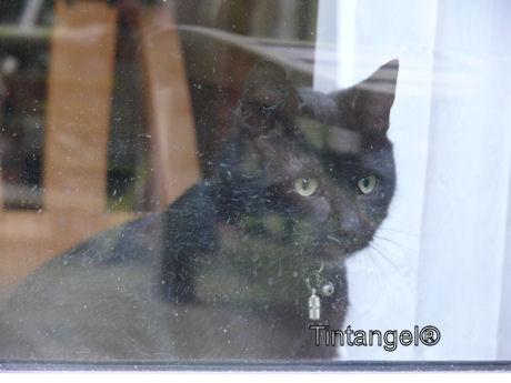 Figaro voor de deur