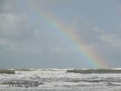 Regenboog w