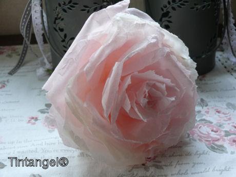 Roos van vloeipapier