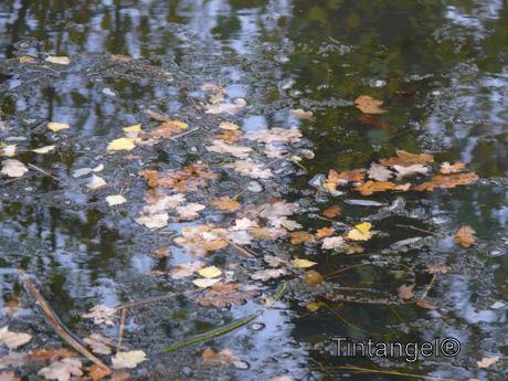 Herfst 4