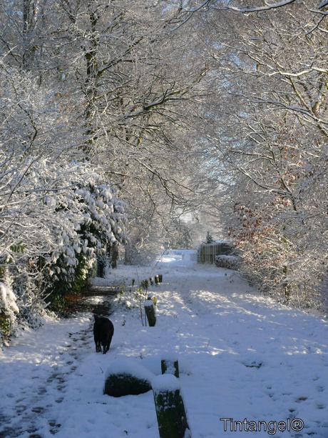 Sneeuw laantje