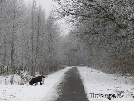 Troy en Jesse in de sneeuw