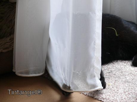 Figaro 5