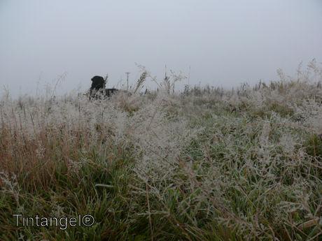 Troy in de mist
