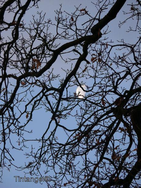 Maan schijnt door de bomen