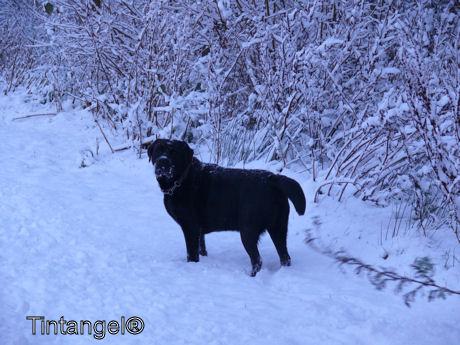 Troy in de sneeuw 2
