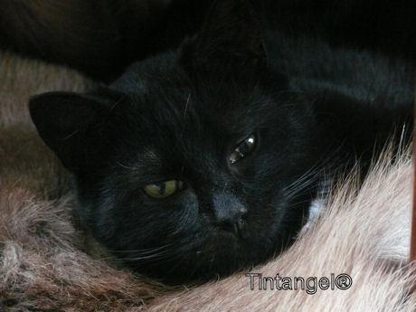 Figaro 1