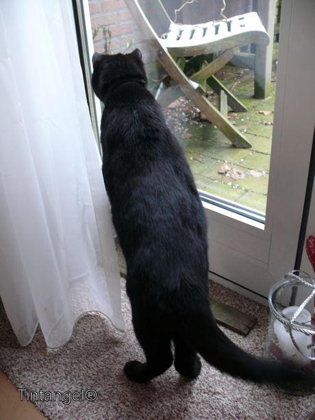 Figaro ziet muis