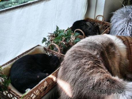 Figaro en Buck