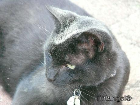 Stoffige Figaro