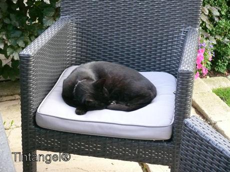 Slapen op een stoel