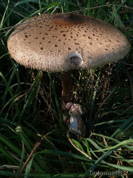 Muis onder paddenstoel