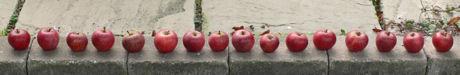 Appelrij