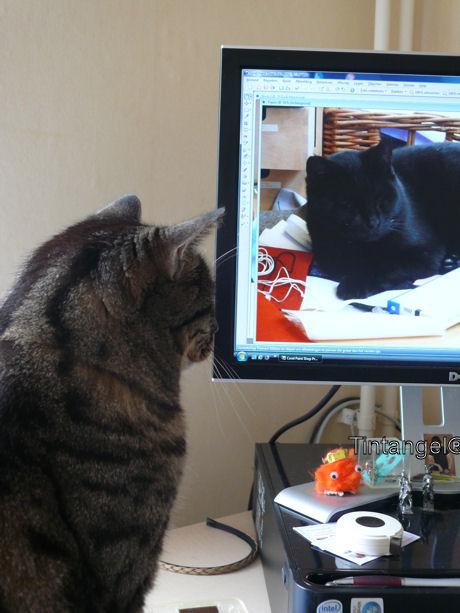 Buck kijkt naar Figaro