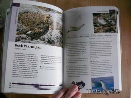Vogelboek