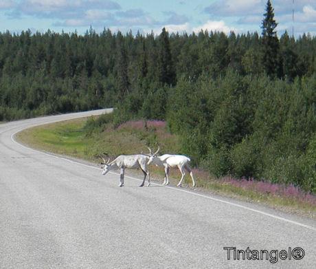 Finland_2005_wk30a 039