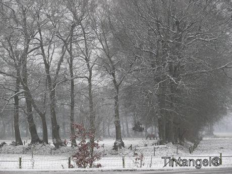 Beetje winter
