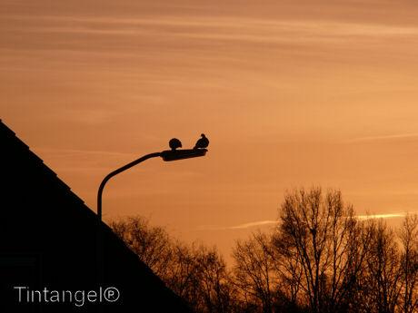 Duifjes in het ochtenlicht