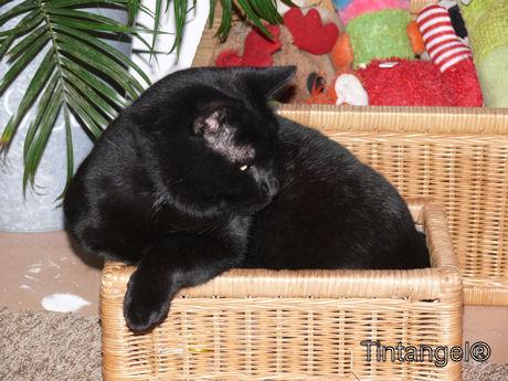 Figaro in de schatkist