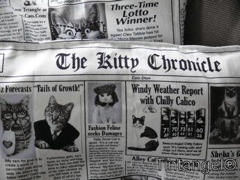 Kitty krant