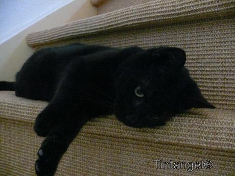 Figaro (5)