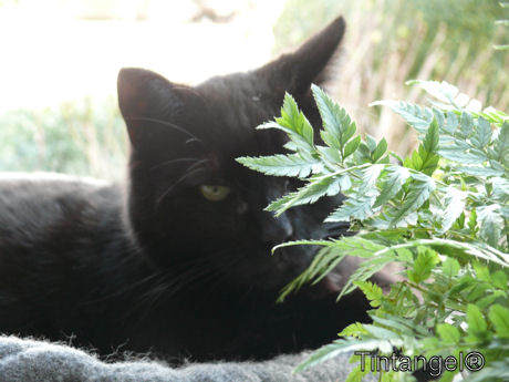 Figaro verstopt