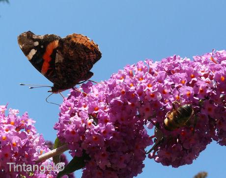 Vlinder en bij