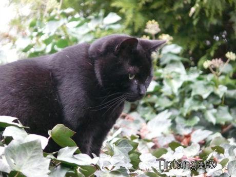 Figaro 3