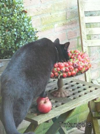 Figaro drinkt