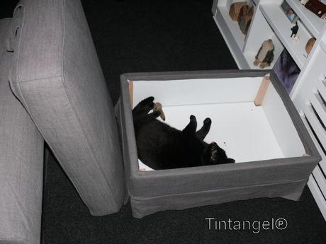 Figaro in de hocker