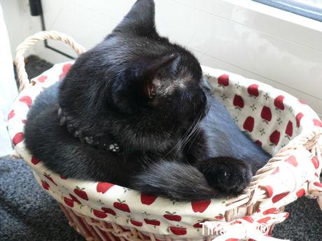 Figaro in mandje