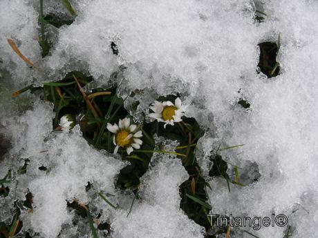 Voorjaar of winter