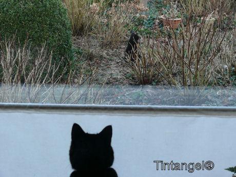 Wat ziet Figaro