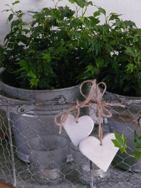 Plantjes enzo