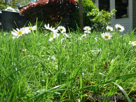 Gras is hoog
