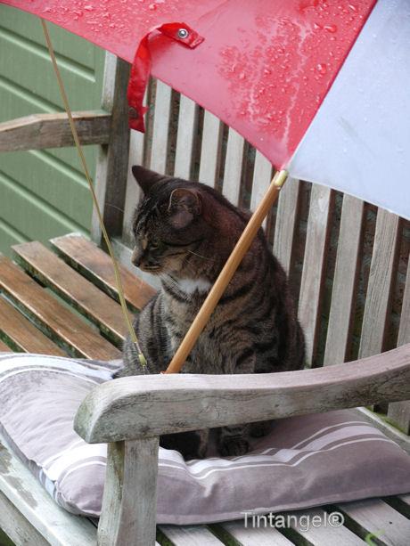 Buck onder de plu met regen