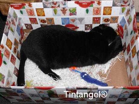 Figaro in doos 2