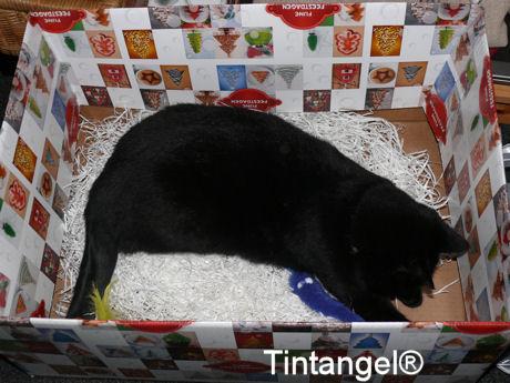 Figaro in doos 3